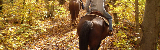 Horse Riding Autumn